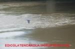 Alluvione12-55